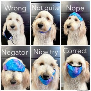 how to wear a mask dog